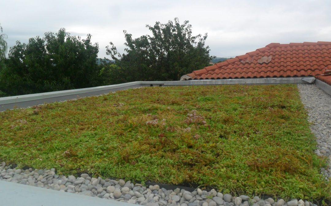 Extension végétalisée à Verniolle